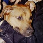 Druna-1993