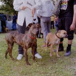 APBTCF-Show-Pibull Posse-1995
